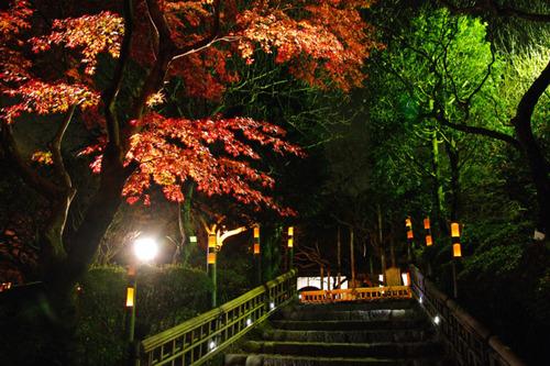百草園ライトアップ2010-1