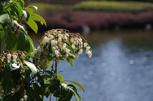 昭和記念公園日本庭園-4