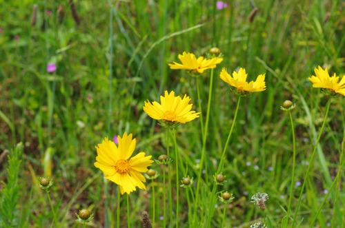 河川敷の花201106-10