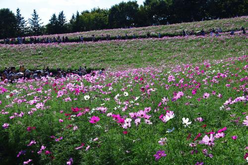 昭和記念公園201010-5