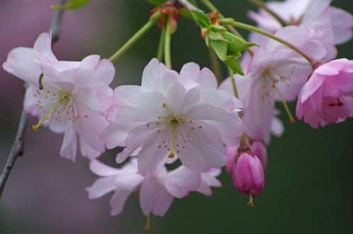 4月の花201104-4
