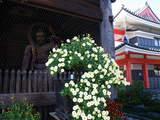 高幡不動081101-8