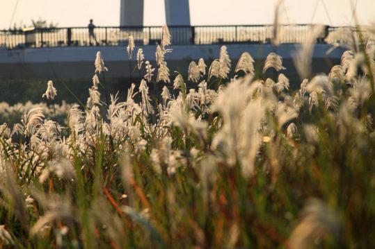 河川敷の秋の夕景-4