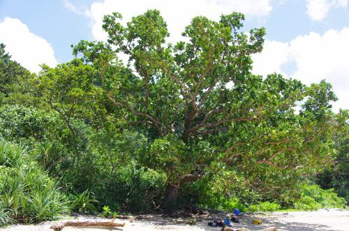 西表島船浮イダの浜201108-9