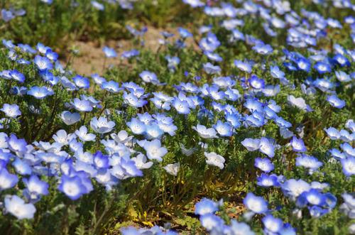 昭和記念公園201104-14