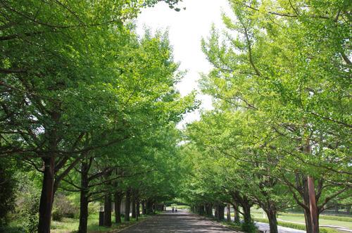 昭和記念公園201408-2