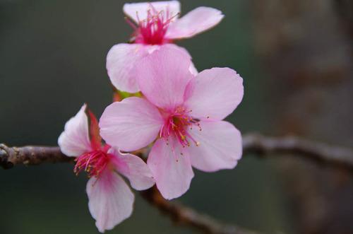 昭和記念公園201111-10