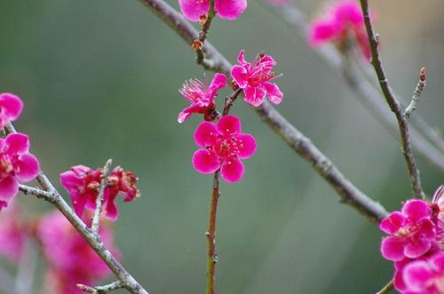 京王百草園201203-14