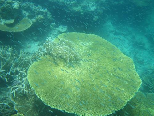 西表島船浮イダの浜201108-15