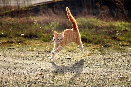 cat-1184727_640