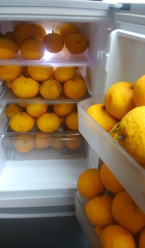 冷蔵庫の夏みかん