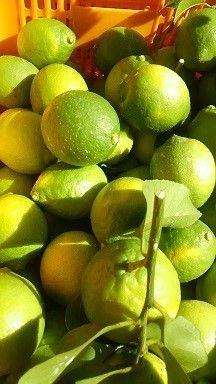 レモン籠小
