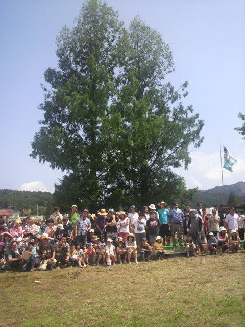 メタセコイアの木の下に300人の人々