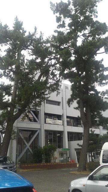 (1)大磯町役場
