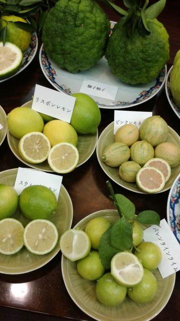 (8)獅子柚子、スィートレモン等々