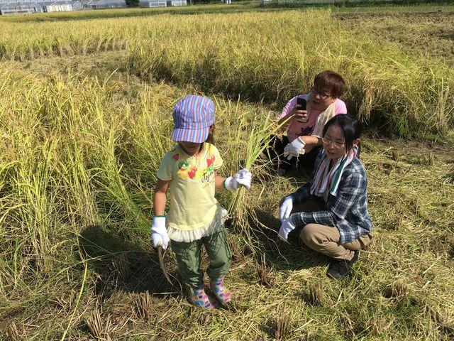 写真5 稲刈り風景2