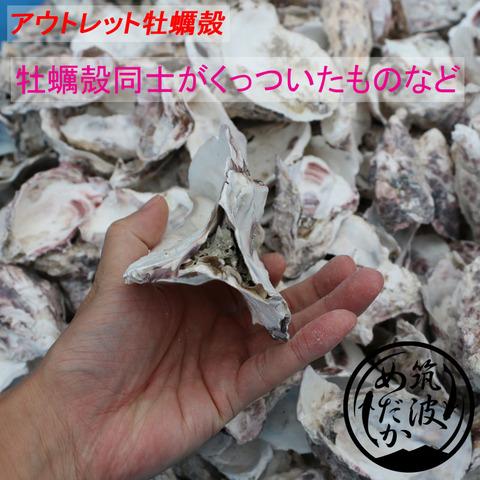 アウトレット牡蠣殻2
