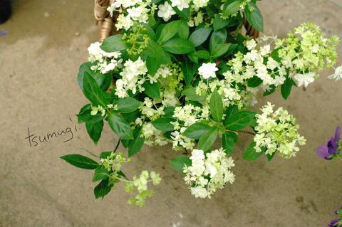お花の季節が変わってきましたよ〜☆
