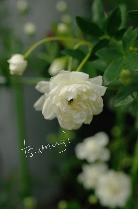 春だから〜お花たくさん!?