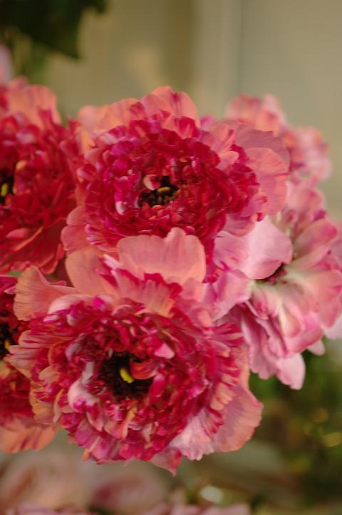 ステキな切り花たち