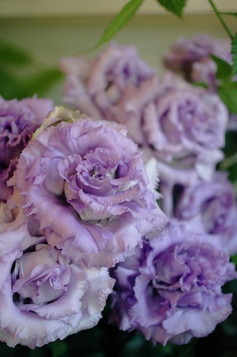 素敵なお花たち集合です♪切り花編