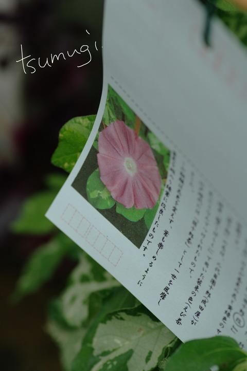 IMGP8424 のコピー