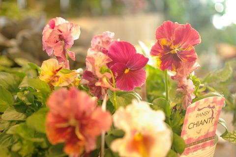 ヤバし。かわいい花♪