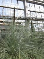 1703植物園 (12)