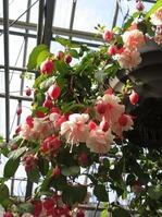 1703植物園 (25)