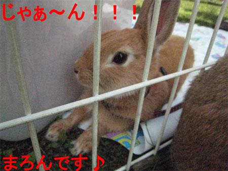 うさんぽ3_20