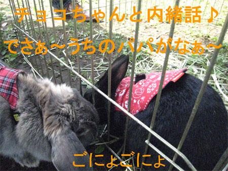 うさんぽ3_16