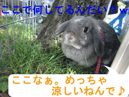 うさんぽ3_11