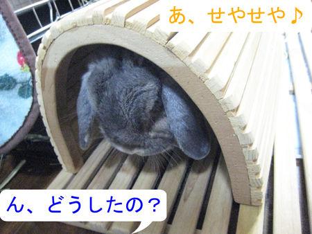 マフまくら_4