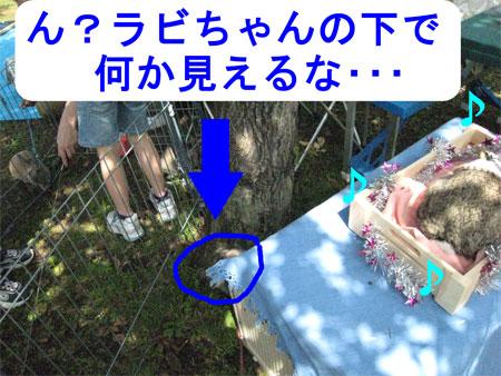 うさんぽ3_9