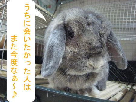 うさフェスタ2011_4