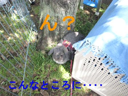 うさんぽ3_10
