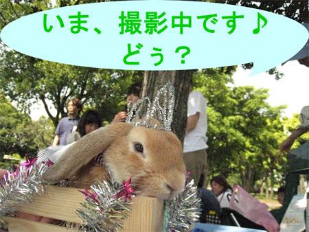 うさんぽ3_13