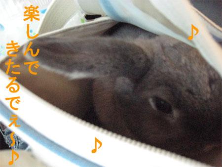 うさんぽ3_1