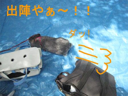 うさんぽ3_3