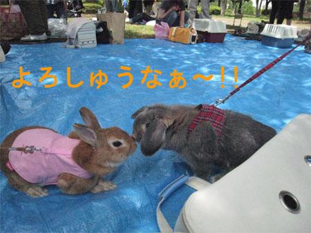 うさんぽ3_4
