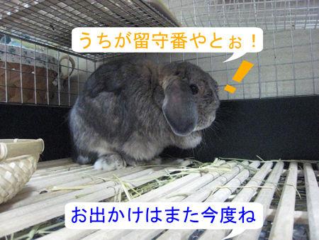 うさフェスタ2011_00