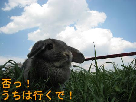 うさんぽ2_5