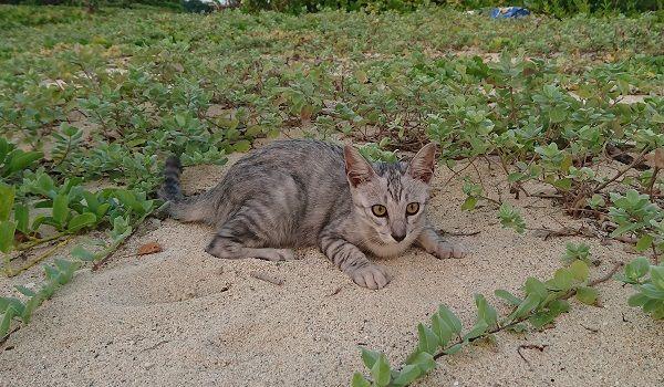 小浜島 猫
