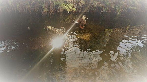 bird_river