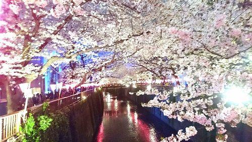 sakura_megurogawa