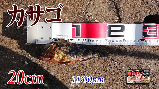 釣果02(カサゴ)670pix