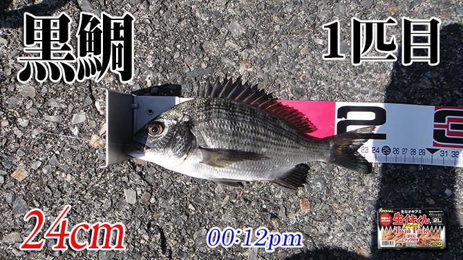 釣果02(黒鯛)670