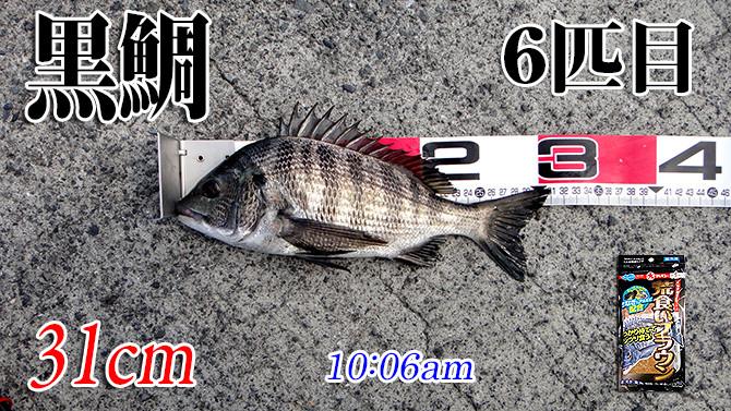 釣果(6)670