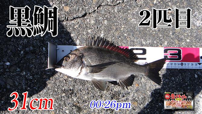 釣果03(黒鯛)670