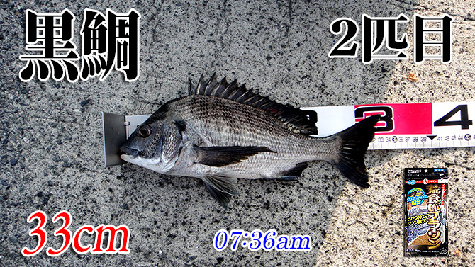 釣果(2)670